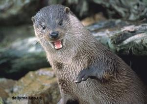dog-Otter