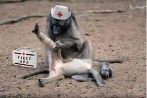 First Ape