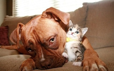 dog-with-kitten